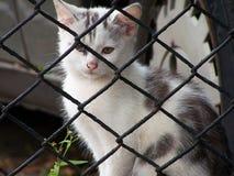 Pequeño gato perdido imagen de archivo libre de regalías