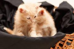 Pequeño gato precioso dos en cesta de mimbre Foto de archivo