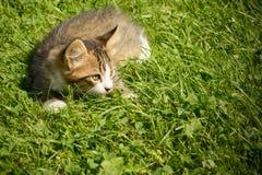 Pequeño gato que juega en la hierba Foto de archivo