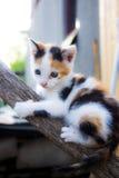 Pequeño gato que sube en un árbol Foto de archivo libre de regalías