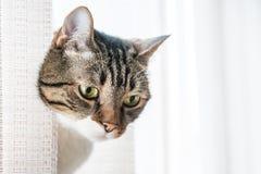 Pequeño gato rayado gris Imagen de archivo libre de regalías
