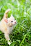 Pequeño gato rojo Imágenes de archivo libres de regalías