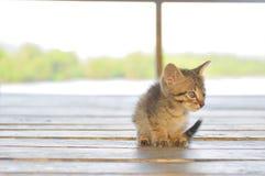 Pequeño gato solo Imagen de archivo libre de regalías