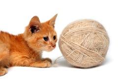 Pequeño gato y ovillo grande de lanas Imágenes de archivo libres de regalías