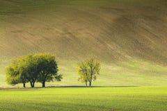 Pequeño grupo de árboles en campo debajo de la onda grande de la colina Foto de archivo libre de regalías