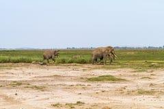 Pequeño grupo de elefantes Amboseli, Kenia, África Fotos de archivo libres de regalías