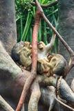 pequeño grupo de los babuinos imagenes de archivo