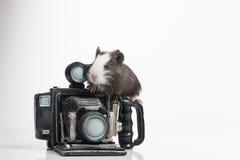 Pequeño hámster agradable que se sienta en photocamera retro Fotos de archivo libres de regalías