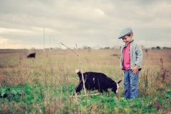 Pequeño herdboy Foto de archivo