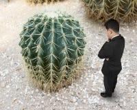 Pequeño hombre que mira el cactus grande Fotografía de archivo