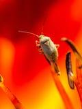 Pequeño insecto Fotografía de archivo