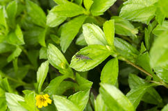 Pequeño insecto Fotos de archivo libres de regalías