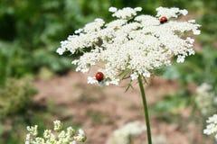 Pequeño insecto Imagen de archivo libre de regalías