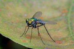 Pequeño insecto de vuelo Foto de archivo