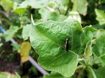 Pequeño insecto en el jardín Fotografía de archivo libre de regalías