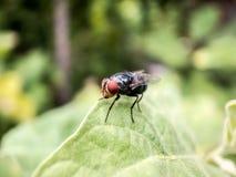 Pequeño insecto en el jardín Imagenes de archivo