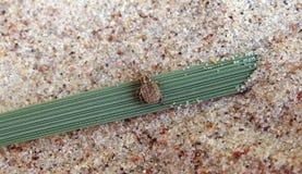 Pequeño insecto en la hierba verde, Lituania imágenes de archivo libres de regalías