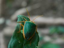 Pequeño insecto que cuelga alrededor fotografía de archivo