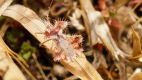 Pequeño insecto rosado Fotografía de archivo