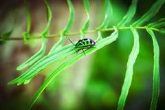 Pequeño insecto verde de un árbol fotografía de archivo