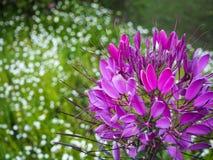Pequeño jardín de flores fotografía de archivo libre de regalías