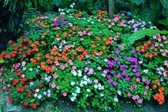 Pequeño jardín de flores colorido Fotos de archivo libres de regalías