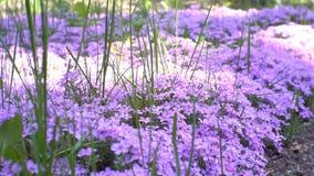 Pequeño jardín de flores con los rayos del sol almacen de metraje de vídeo