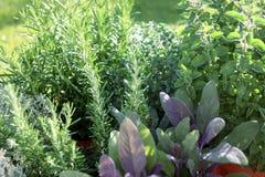 Pequeño jardín de hierbas Imágenes de archivo libres de regalías