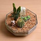 Pequeño jardín del cactus en la tabla de madera Imagen de archivo libre de regalías