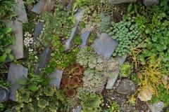 pequeño jardín suculento foto de archivo