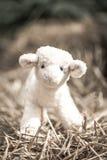 Pequeño juguete de las ovejas Imagen de archivo libre de regalías