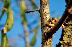 Pequeño juguete del mono en árbol fotos de archivo