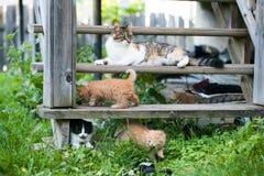 Pequeño kittesn dulce con el juego de la madre en el patio trasero Foto de archivo