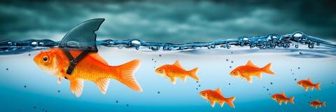 Pequeño líder valiente del pez de colores foto de archivo