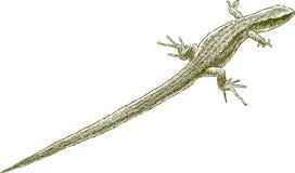 Pequeño lagarto stock de ilustración