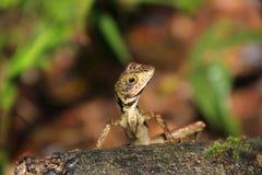 Pequeño lagarto Foto de archivo
