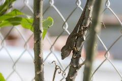 Pequeño lagarto en una rama imagen de archivo