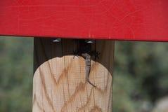Pequeño lagarto que oculta del sol Imágenes de archivo libres de regalías