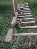 Pequeño lagarto verde Imagenes de archivo