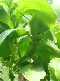 Pequeño lagarto verde ocultado imagenes de archivo