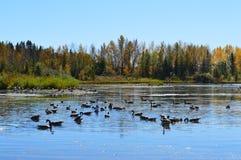 Pequeño lago Fotos de archivo