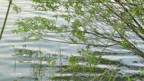 Pequeño lago con los árboles almacen de metraje de vídeo