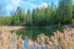 Pequeño lago del bosque en día soleado fotografía de archivo libre de regalías