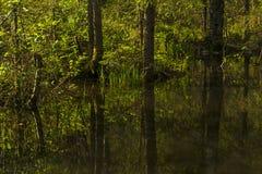 Pequeño lago del bosque en la sombra de árboles Imagen de archivo