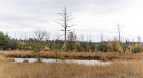 Pequeño lago Drente imagen de archivo libre de regalías