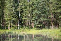 Pequeño lago en bosque de la primavera Fotografía de archivo