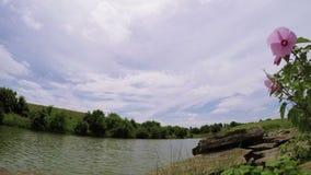 Pequeño lago en Kentucky central almacen de metraje de vídeo