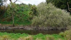 Pequeño lago en pantano en Nueva Zelanda imagen de archivo libre de regalías