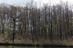 Pequeño lago en primavera Fotos de archivo