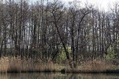 Pequeño lago en primavera Fotografía de archivo libre de regalías